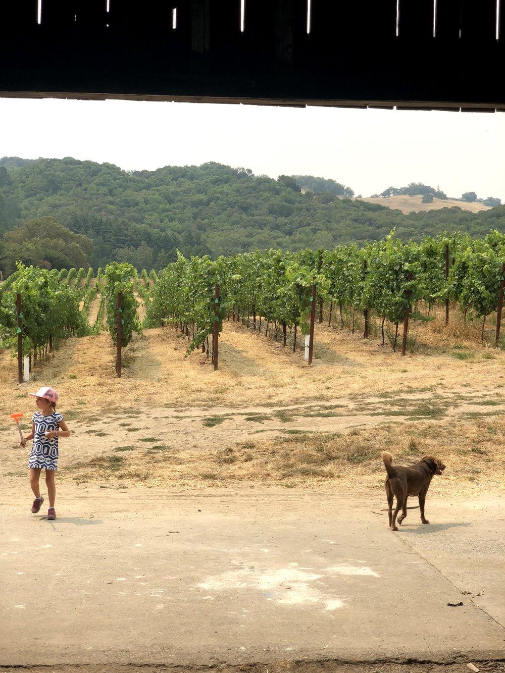 Kid and Dog Friendly Belden Barns
