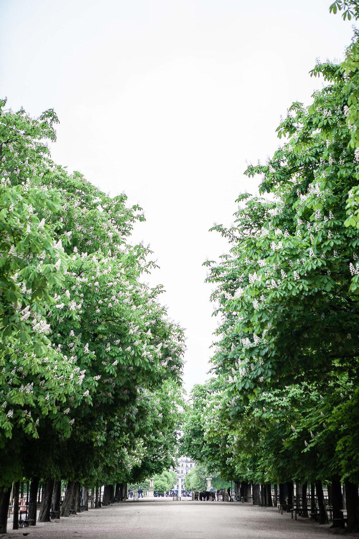 Jardinduluxembourg_paris_siforellana.jpg