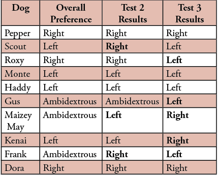 Table 1. This table shows that some of the dogs changed preferences between their final paw preference and Test 2 (test 2 was a very reliable test).  These differences are shown in bold. This makes me wonder if their result for test 2 is the most accurate and should be their final paw preference. This chart also shows how a dog's lateralization preference can be the opposite of their paw preference. These differences are shown in bold.