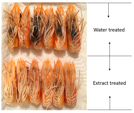 Figure 3. Comparison of shrimp treated by water and DFP extract.