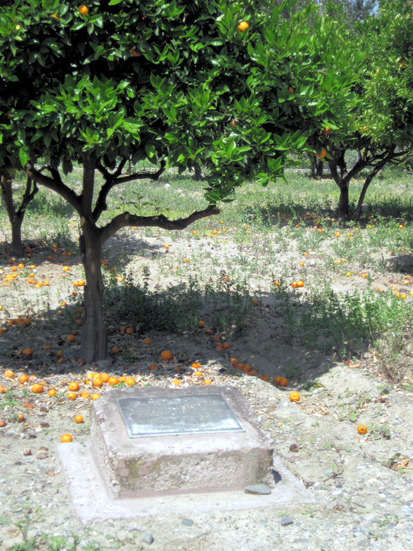 Robert D. Hoyt orange grove at Hart Park.