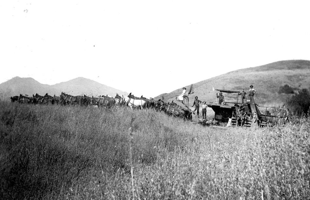 Sleeper & Waller's harvesting rig on the Trabuco Mesa, circa 1909.