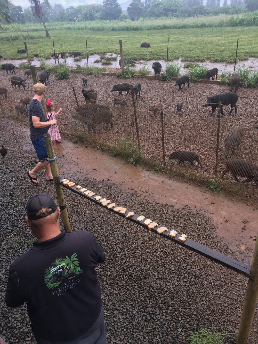 Pig Feeding Stop