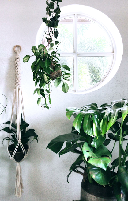 HOW INSANELY BEAUTIFUL! This plant setup has got me all googly eyed. My Macrame plant hanger really looks great surrounded by all her green friends! Thanks for being such a good plant mama!