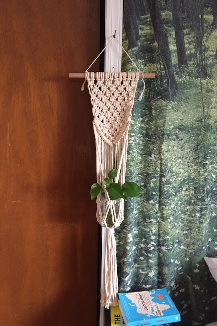 Beautiful macrame plant hanger completed by a student in a workshop. Propagated pothos, epipremnum aureum, for the client.