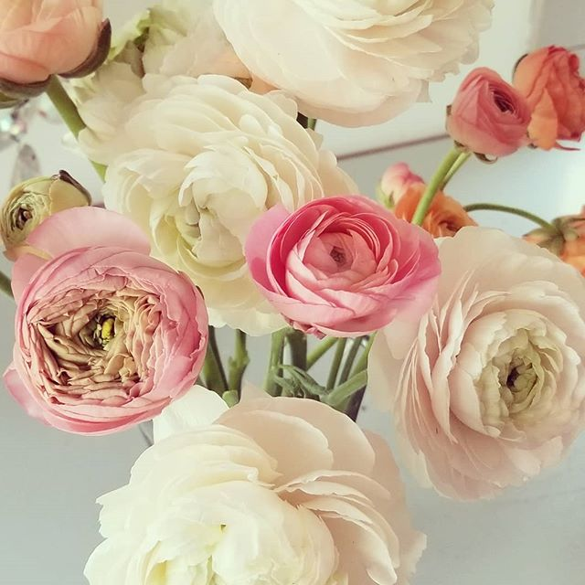 #botanikal #ranunculus spring flowers are my fav!