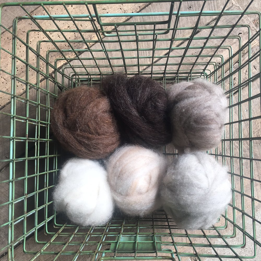 Naturally colored roving from Gail's flock.