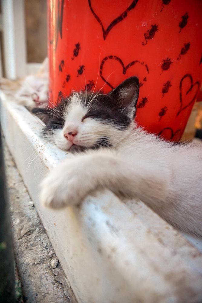 Napping on a windowsill