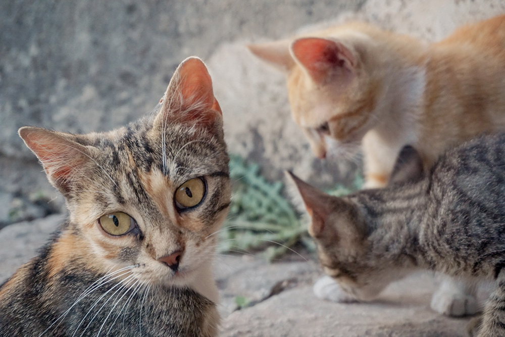Kittens at the city wall in Kotor