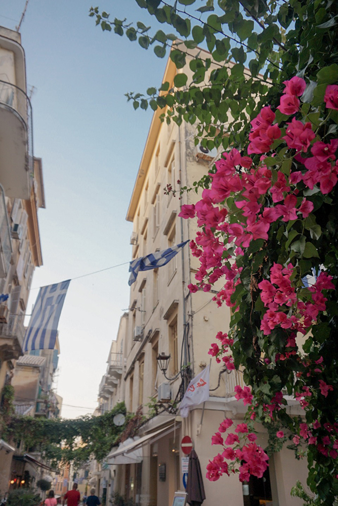 Bougainvilleas and blue sky in Corfu town