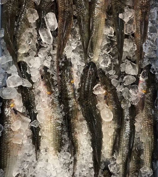 Fresh Local Mullet