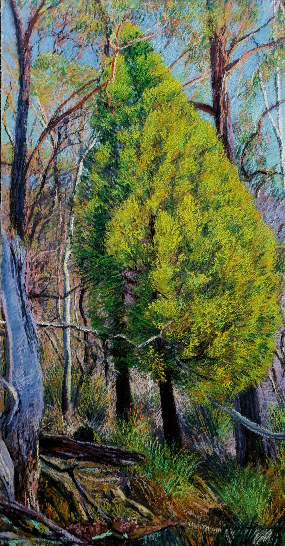 Cherry Tree - Jonathan Bowden