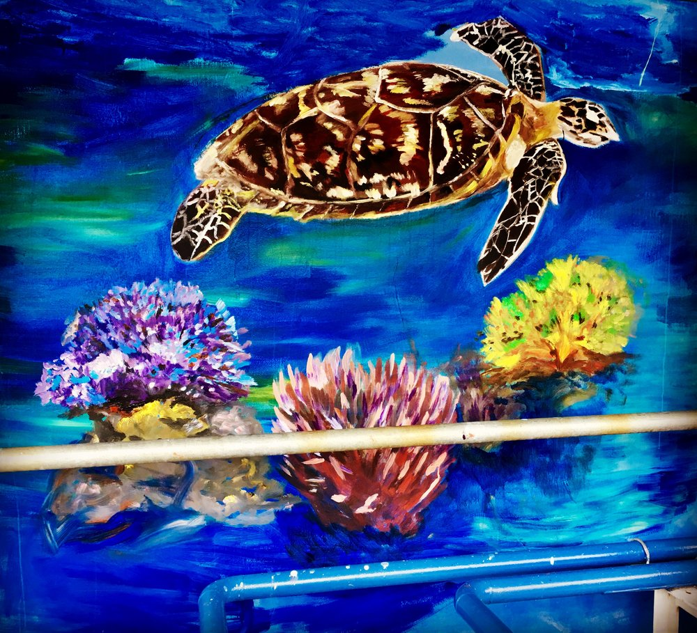 One of a few sea turtles - one of my several favourites