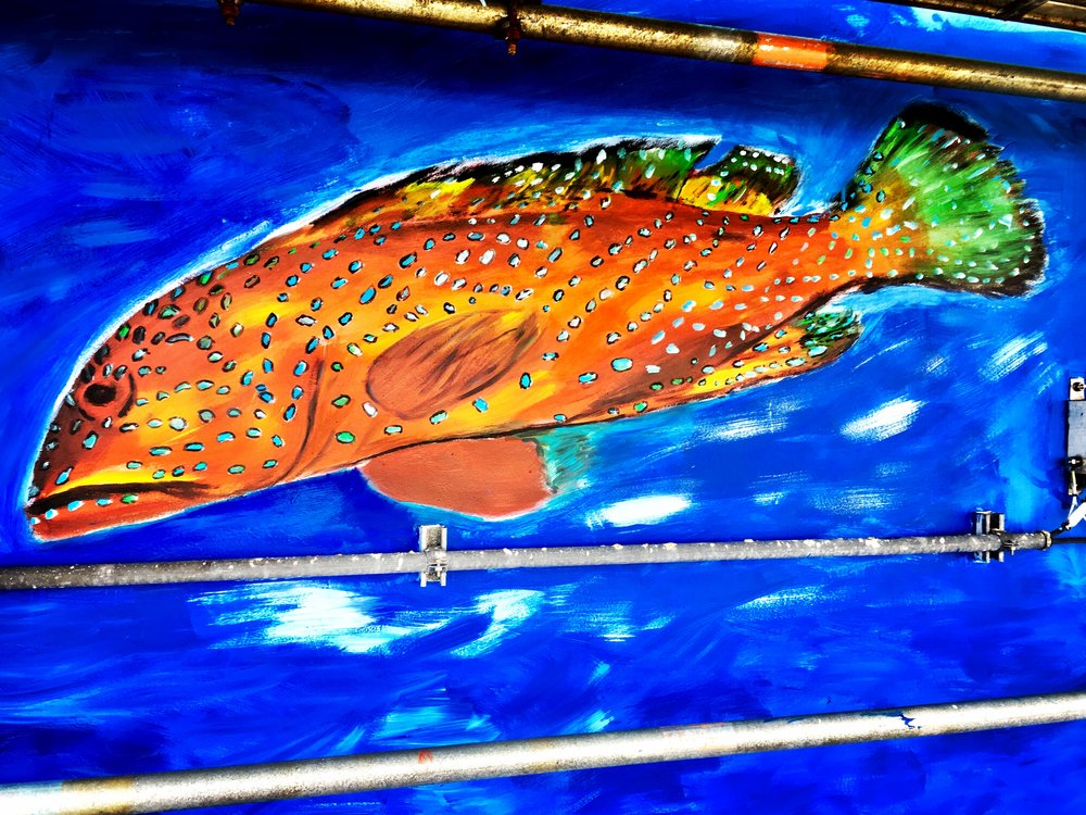 Colourful groupers or trouts