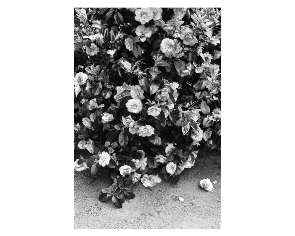 Flowers Print Debbie Carlos Studio