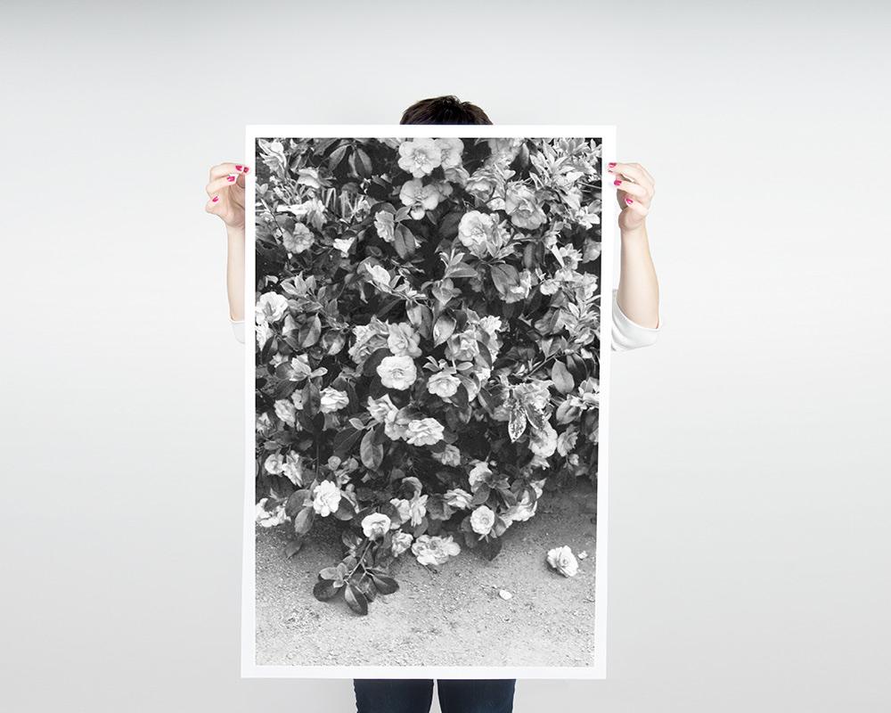 Flowers Poster Debbie Carlos Studio