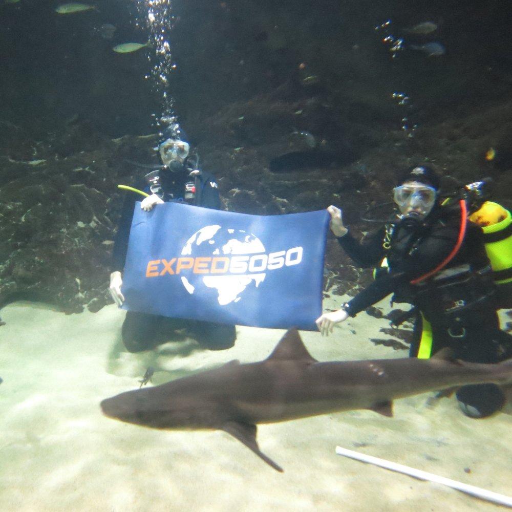 Kelly Tarlton's Sealife Centre - New Zealand