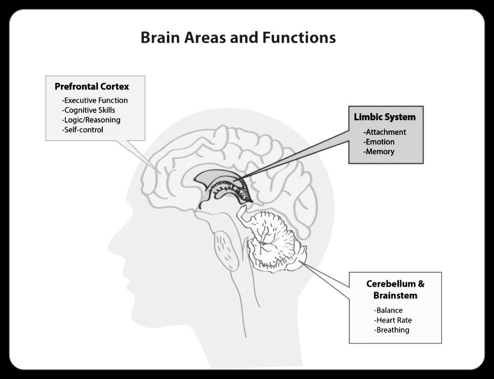 mindfulness brain