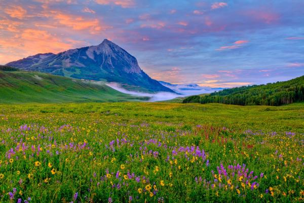 Field-of-Wildflowers-Crested-Butte-Area-by-Allan-Ivy.jpg