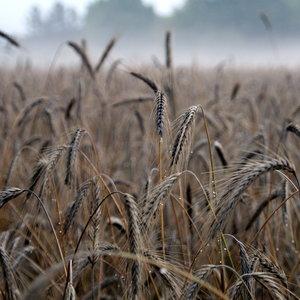 1.FarmingB.JPG