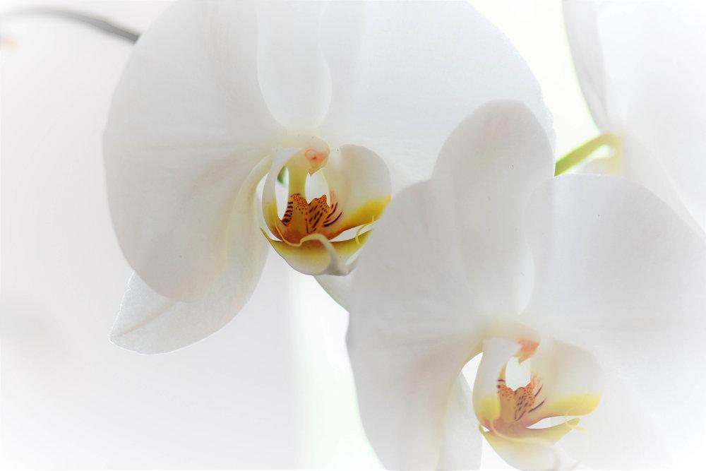 Orchid Arrangements.jpg