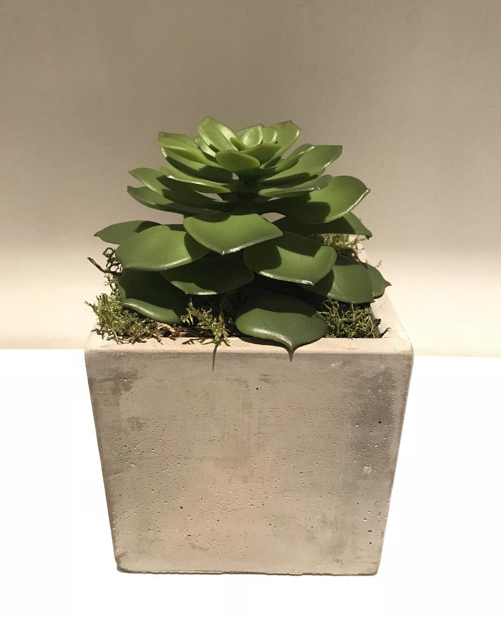 Faux Artificial Succulent.jpg