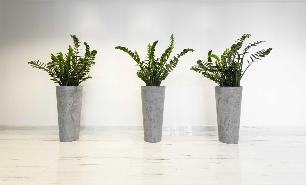 Weekly Hotel, Office and Restaurant Plants & Flowers London