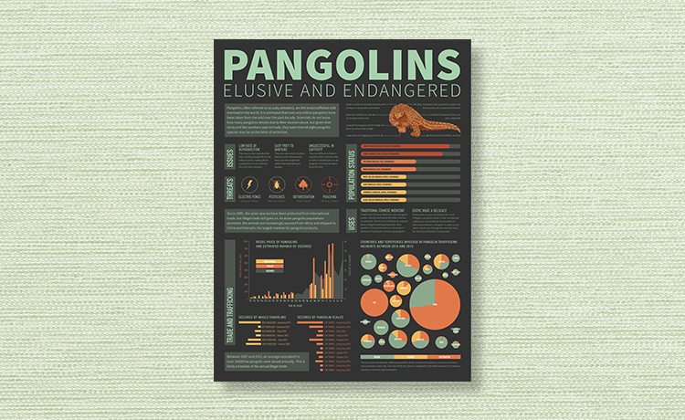 Pangolins: Elusive and Endangered - Data Visualization, Visual Design, Research