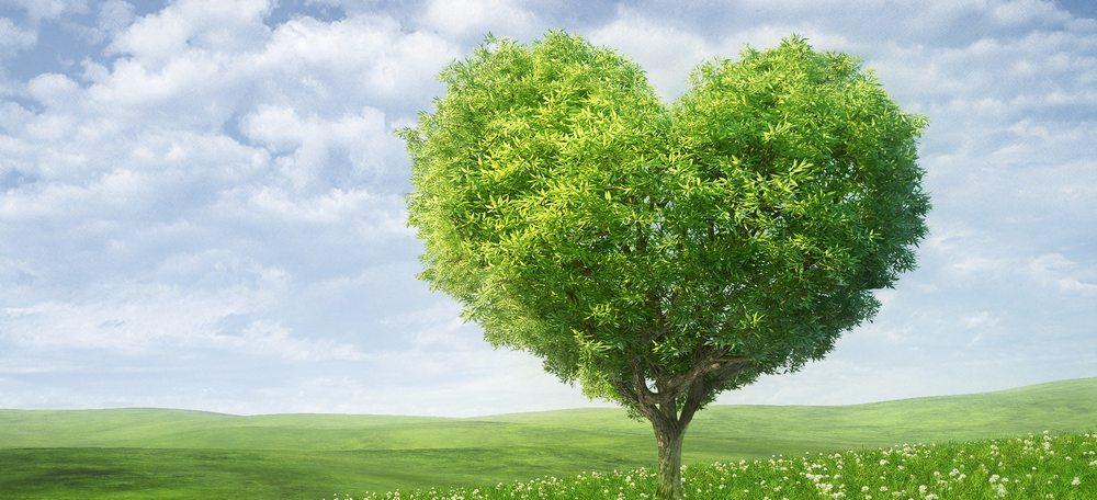 Save trees.jpg