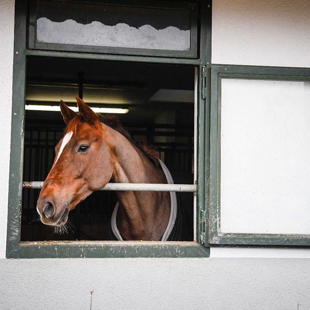 Helle Innenboxen für CHF 950.  #baholzreitsport #baholz #pferdesport #pferde #horse #horsebackriding