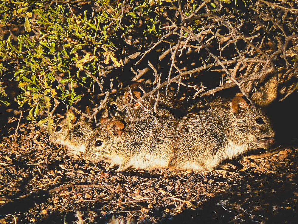 mouse group-1-2.jpg