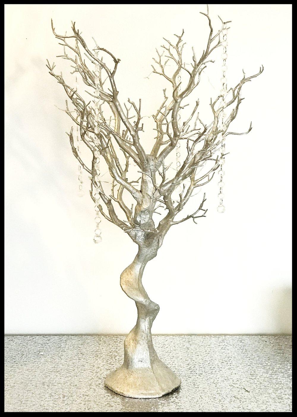 Silver Manzanita Tree