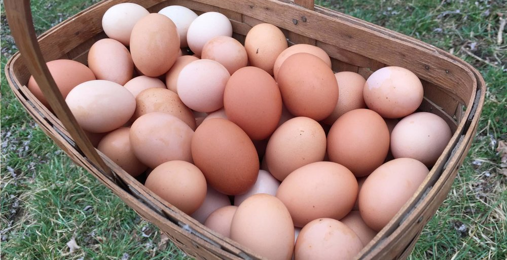 front9farm-fresh-eggs.jpg