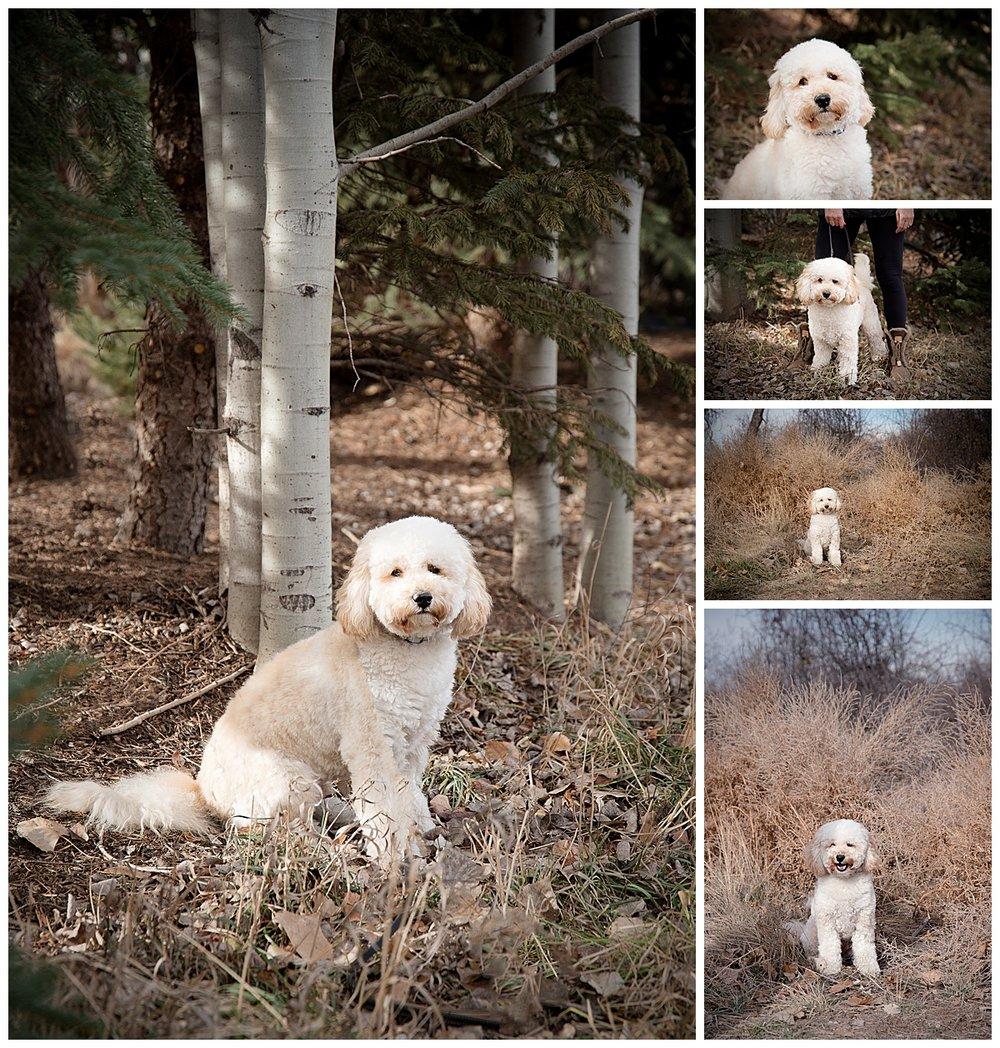 bear dog portraits.jpg