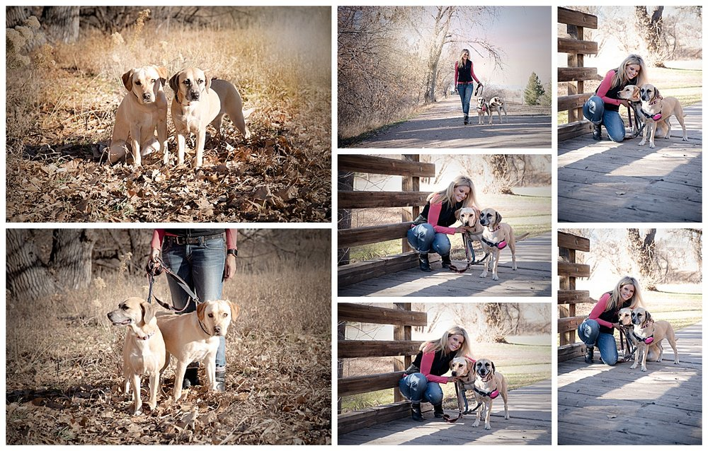 dog-photography-littleton-denver-colorado-junebug-2.jpg