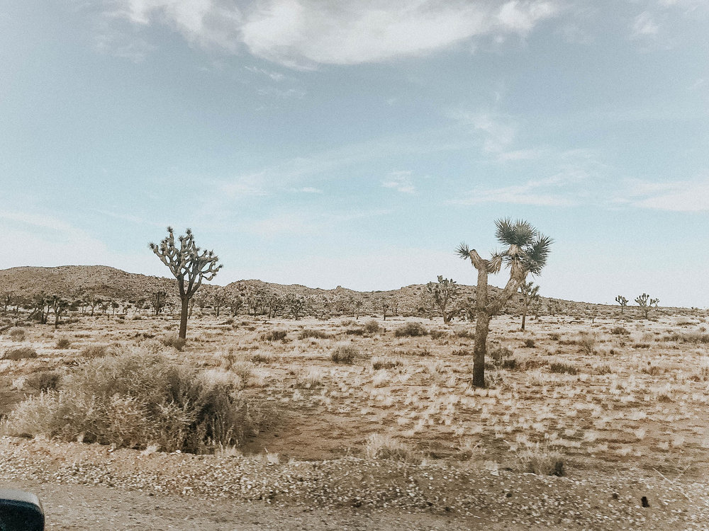 My brother flew in from Denver for a few of the days so we made the short trip to  Joshua Tree . I decided to stay off my phone, so I barely have any pictures, but this place is breathtaking. It's so bizarre and unique, definitely a must see. I am already starting to plan my trip back so I can spend a few nights camping here!