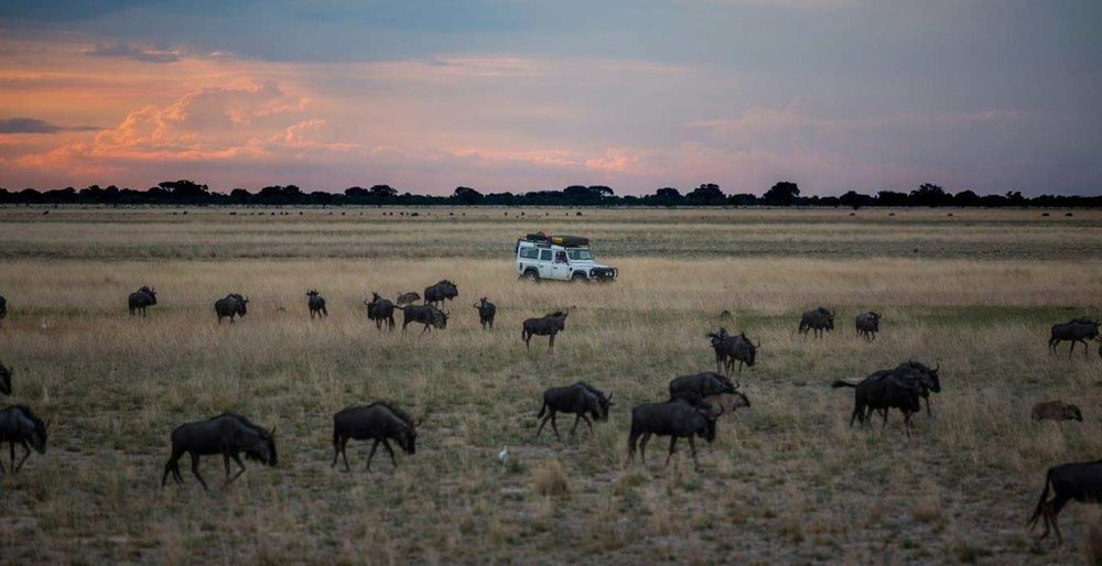 Wildebeest on Liuwa Plains