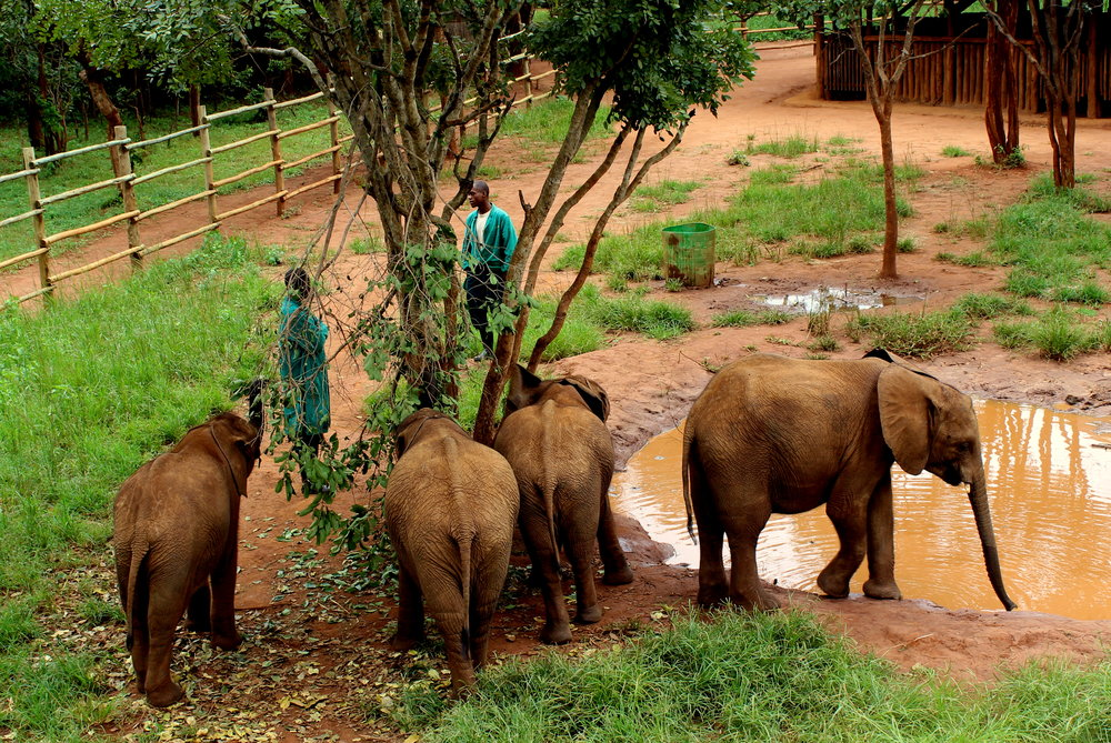 Elephants at the Lilayi Elephant Orphanage