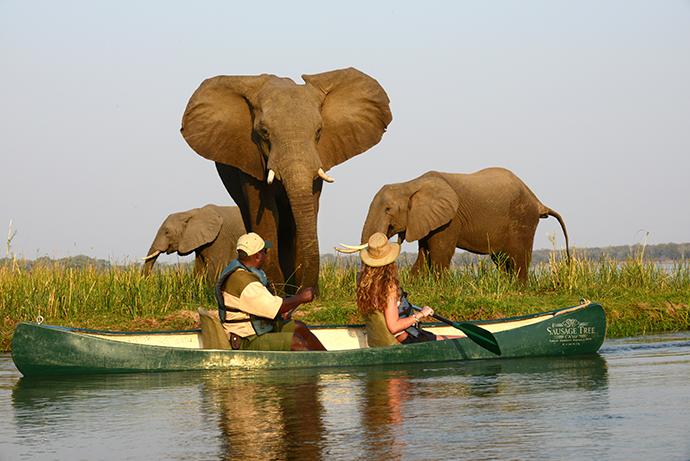 Elephants from a canoe