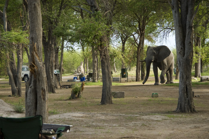 Elephant at the Nxai Pans campsite