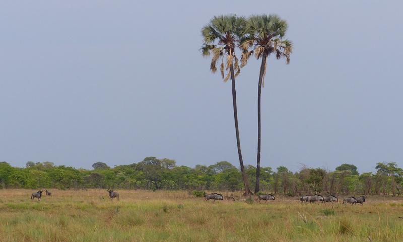 floodplain-grassland-nanzhila-plains.jpg