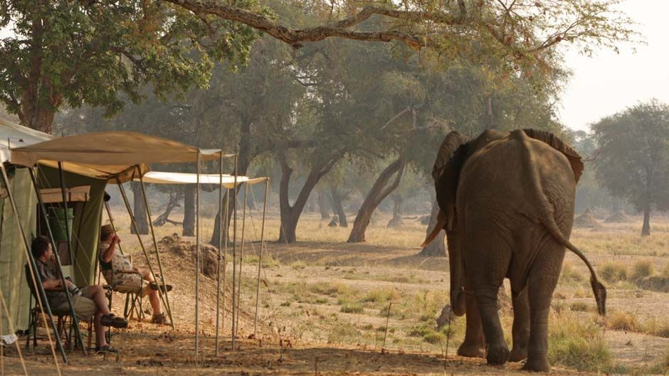 Elephant in Mana Pools, Zimbabwe