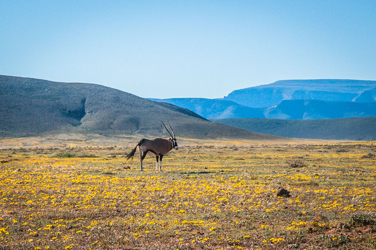 Tankwa Landscapes