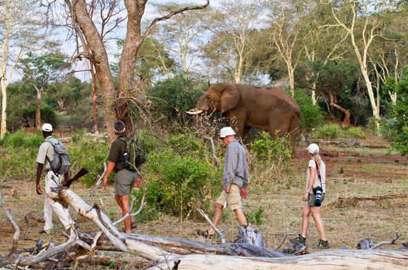 walking safari in africa with elephant in background