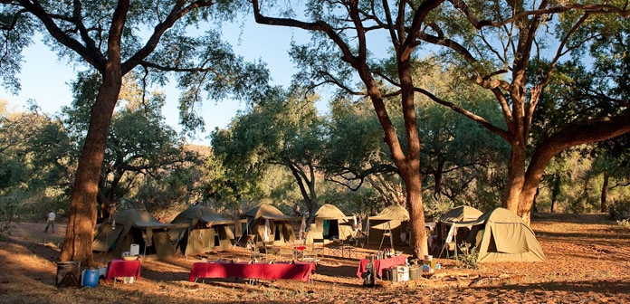 tents under tree on safari trail in south africa