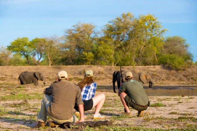 safari walking trail with guide in africa