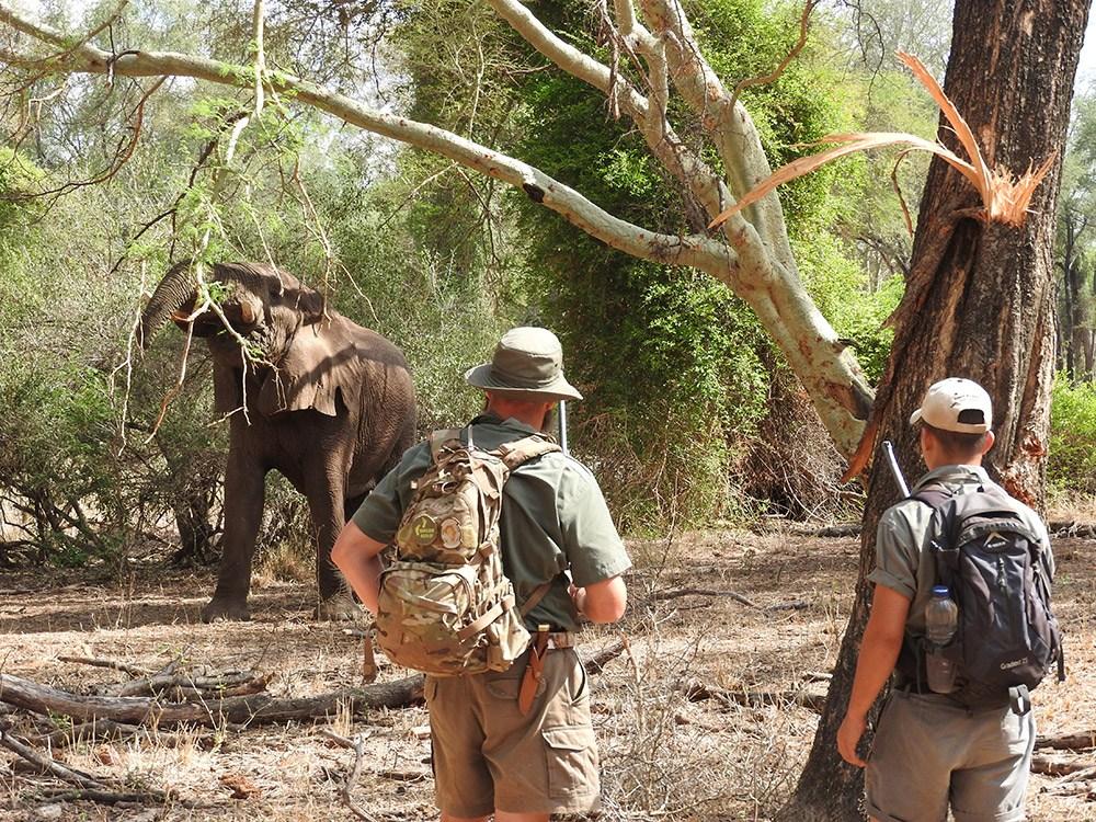Walking safaris in the bush