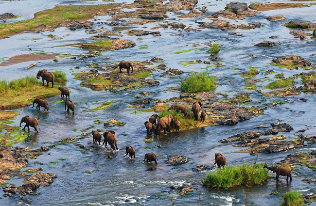 Elephants cross the Letaba River in the Kruger National Park