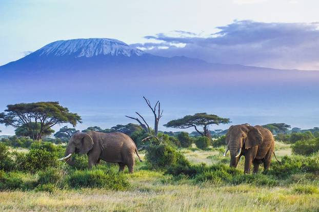 elephants in kenya with mount kilimanjaro in the background