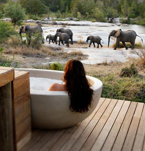 londolozi bath river elephants south africa safari
